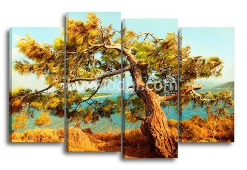Дерево-сосна-главня-(89х135)