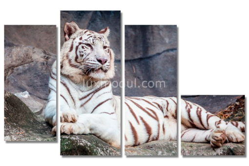 Белый-тигр-на-камнях(89х147см)