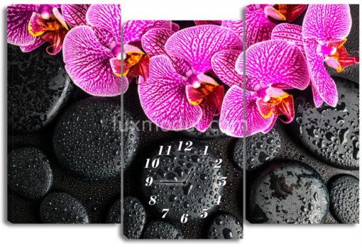 Пятнистая орхидея на камнях
