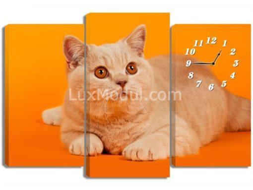 Кот-с-рыжими-глазами-(75х110см)