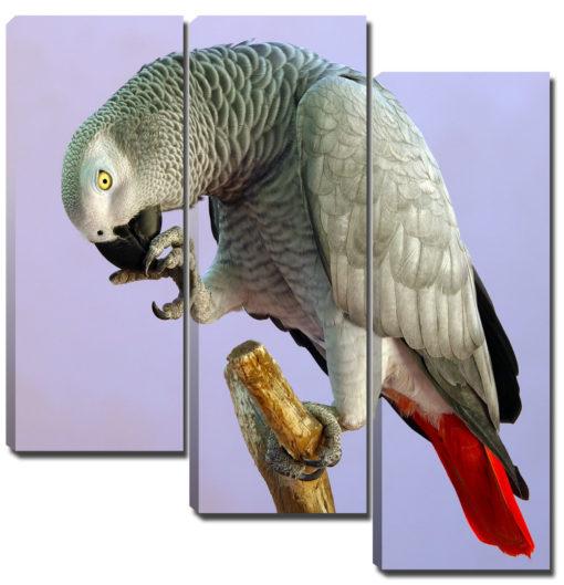 Триптих модульная картина 3 части птица серый попугай