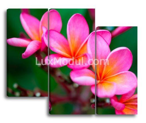 Розовая-плюмерия(89х107см)