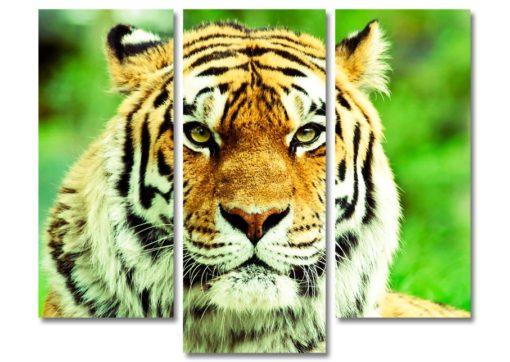 Тигр-морда-главная-(89х110см)