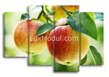 Модульная картина на кухню Спелые яблоки на ветках из 4 модулей - Полиптих фото