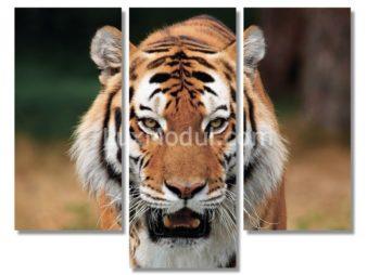 Модульная картина без часов триптих «крадущийся тигр» 3 части – фото