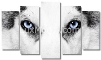 Модульная картина из 5 частей собака хаски - фото