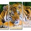 модульная картина тигр на лапе — фото
