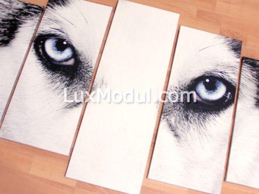 готовая модульная картина из 5 частей собака хаски - фото