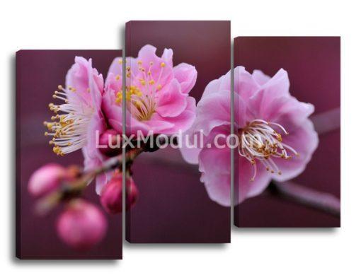 Цветки-сакуры-(75х105см)