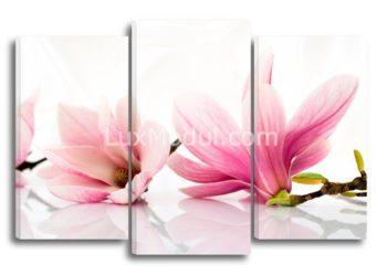 Модульная картина - цветы магнолия