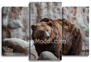 Медведь у камней