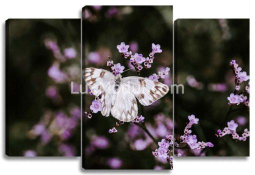 сакура и бабочка