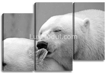Белые медведи чёрно-белая